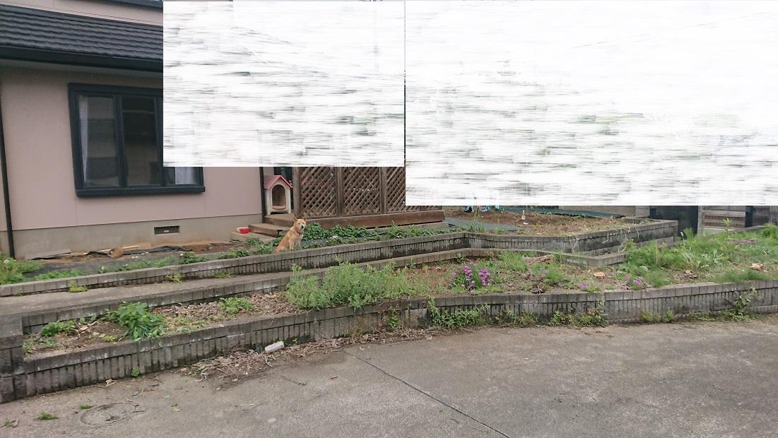ジモティーで伐採後の庭
